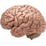 ¿Cómo sabe nuestro cerebro si alguien está contento o triste?