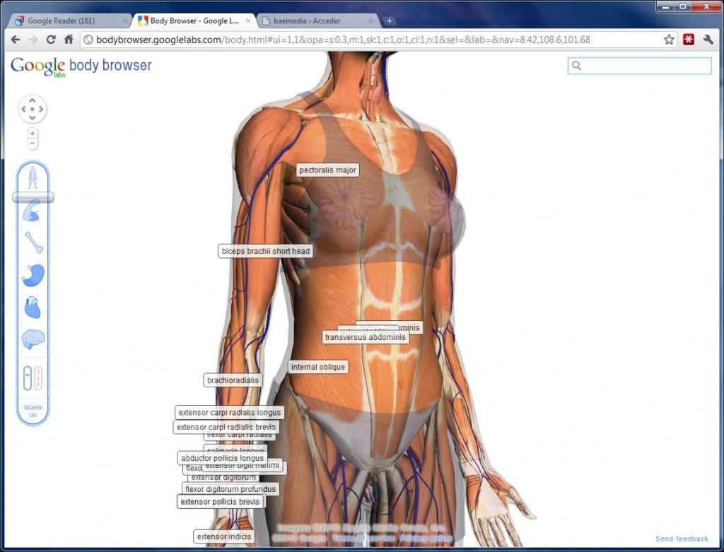Famoso Fotos Del Interior Del Cuerpo Humano Ilustración - Anatomía ...