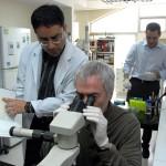 Investigadores de la Universidad de Stanford diseñan un 'gadget' inalámbrico que estimula el sistema nervioso